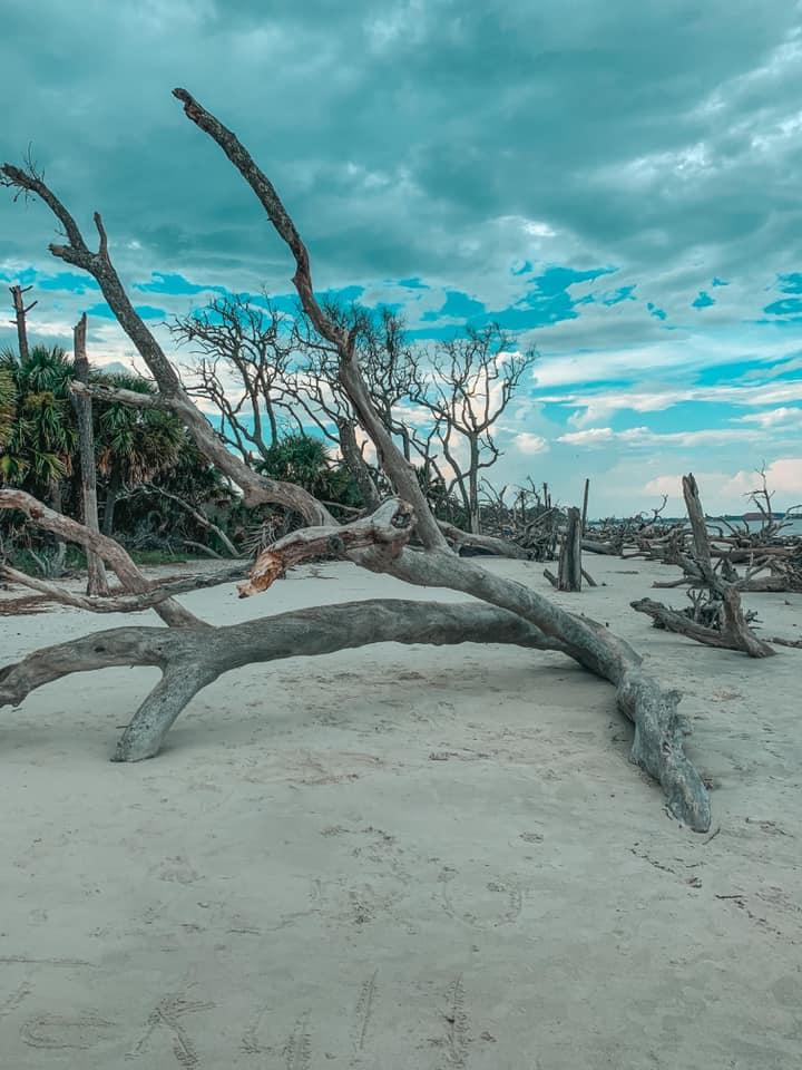 Driftwood on Driftwood Beach on Jekyll Island